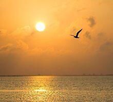 Sweet Serenity by amandafaith