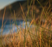 Bokeh grass  by s2kologist