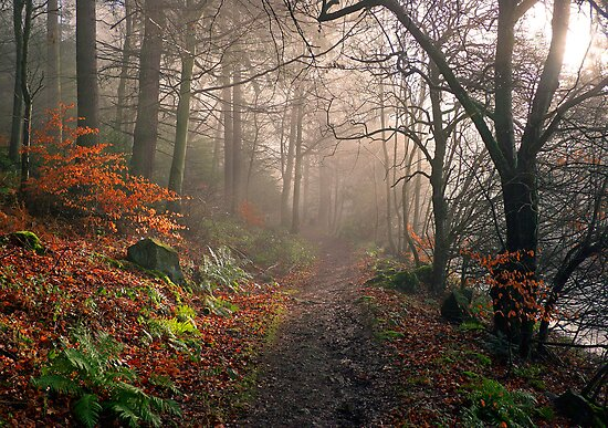Footpath through Dodd Wood, Bassenthwaite by Martin Lawrence