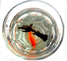 Fishes in Tall Glass by NicoleDiesel