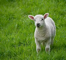Who loves ewe, baby? by TheWalkerTouch
