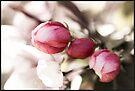 Spring Awakening by KBritt