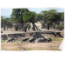 Elephant Herd in Tanzania Poster