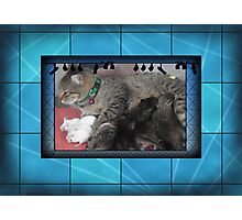 Cat and mouse Photographic Print