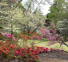 Baby Azalea Shaded by Red Buds. by bannercgtl10