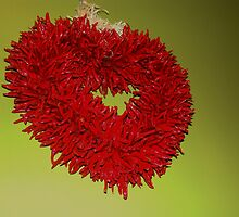 Chili Pepper heart by jeanlphotos