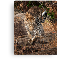 Late Morning Stroll Canvas Print