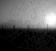 Catching the day - spider series 3 by Enivea