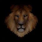 Male Lion by John Ryan