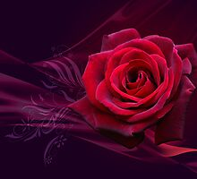 Magical Rose POSTCARD by Lilyas