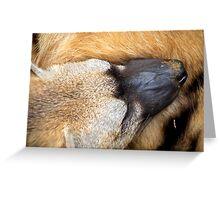 Sleeping Aardwolf Greeting Card
