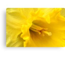 Yellow Daffodil Closeup Canvas Print