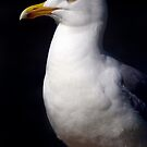 Standing Seagull by SerenaB