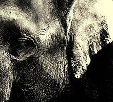 Asian Elephants Face by Stan Owen