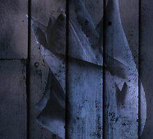 Tulip Behind the Blue Door by MotherNature