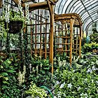 The Conservatory by Robin Lee