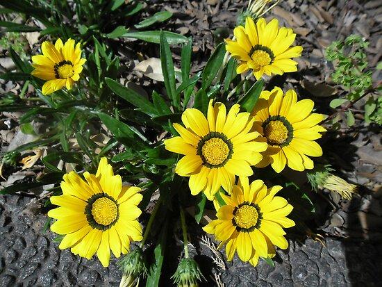 Yellow Flowers by Ilunia Felczer