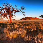 Tree at Sunrise by Jill Fisher