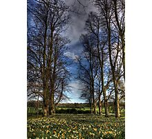 Daffs and Trees  Photographic Print