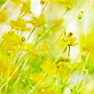 If you love yellow field... by Kornrawiee