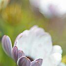 Pure Petals by Karol Livote