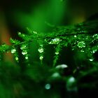 Crystal Drops On Green by saseoche