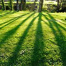 tree shadows in the park by tego53