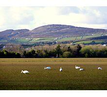 Wetlands Wild Geese Photographic Print