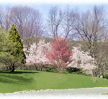 Trees of Spring by Kenneth Hoffman