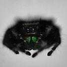 Hunting Spider by Dennis Stewart
