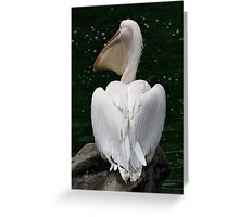 Great White Pelican Greeting Card