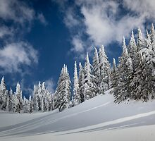 Mazama Trees by Inge Johnsson