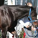 Champion ... legend ... Black Caviar by Denzil