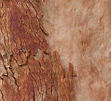 Red Eucalyptus Tree Shedding its Bark by Michael Deeble