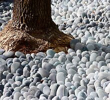 surrounding by stones. by Max Franz Jr.