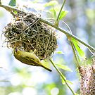 Hanging Under Nest by Mark Fendrick