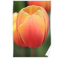 Keukenhof Tulip Poster