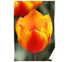 sunshine colours Poster