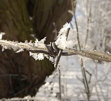 Snow Barbed Wire by TesniJade