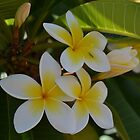 The Frangipani by Patrick Forrest