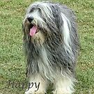 Bearded Collie by JEZ22