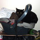 Black cat in baby car seat by rkdownton