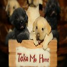 TAKE ME HOME...NO PROBLEM by Sherri     Nicholas