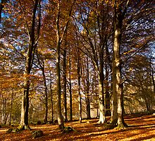 Grass Woods, Yorkshire Dales by Jim Round