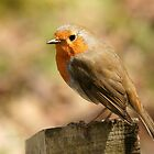 Robin by MendipBlue