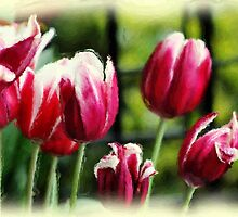 *Painted Tulips* by DeeZ (D L Honeycutt)