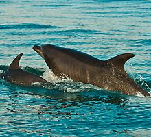 DOLPHIN MUM AND BABY by EGGY6198
