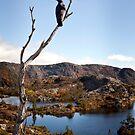 Currawong View by Karen Scrimes