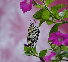 Butterfly House by Renee Ellis