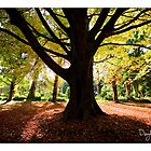 Wombat Hill Botanical Gardens, Daylesford by Craig Holloway